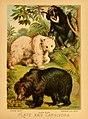 The animal kingdom (Plate XXIV) (6130247436).jpg