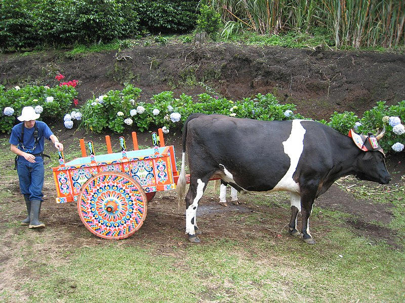 File:The cow pushing the decorated cart.jpg
