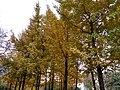 The fall of the Fuyang Park 5.jpg
