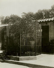 The first navel orange tree in California replanted here by President Theodore Roosevelt, ca.1910 (CHS-5239)