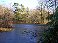 The frozen lake in Wayford Wood. - geograph.org.uk - 1097012.jpg