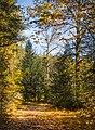 Three Sisters Wilderness, Oregon, Fall Leaves (37030825181).jpg