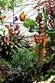 Thunbergia mysorensis 2 - Buffalo Botanical Gardens.jpg