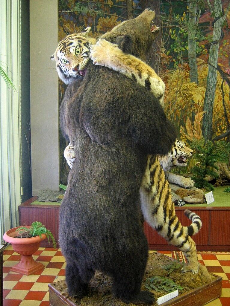 filetiger and bear arsenev regional history museum