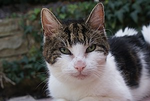 English: A Photo of Tiggy the talking cat take...