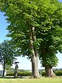 Tollet 2 Rosskastanien bei Statue Hl. Johannes v.Nepomuk.jpg