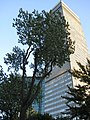Tour CIBC and ADM Building from Square.JPG
