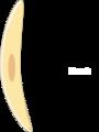 Toxoplasma gondii merozoite.png
