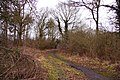 Track in Hell Coppice - geograph.org.uk - 1710914.jpg