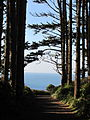 Trail to North Head Light, WA, 2011.JPG