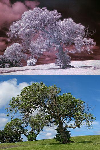Tree example BOTH