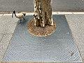 Tree grate in the City of Brisbane, Queensland, 01.jpg