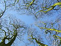 Trees near Avebury.jpg