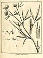 Trifolium guianense Aublet 1775 pl 309.jpg
