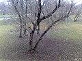 Troicki pasad, Mahilioŭ, Belarus - panoramio (182).jpg