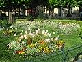 Tulipes Pensées Primevères.jpg