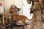 U.S. Marines with Golf 2-8 Conduct Mission Rehearsals 130710-M-YH552-046.jpg