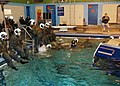 US Navy 060201-N-2832L-118 Students taking a water survival refresher course exit the training tank.jpg