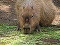 Ueno zoo, Tokyo, Japan (75233340).jpg
