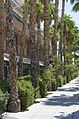 University of Arizona, Tucson, Arizona - panoramio (3).jpg