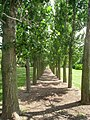 University of Illinois Arboretum - IMG 9479.JPG