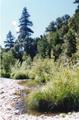 Upper Scotts Creek 1996.png
