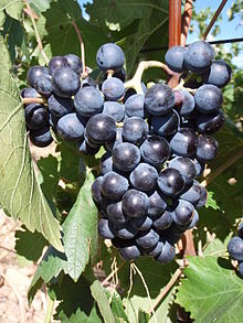 Brun Argenté – Wikipedia