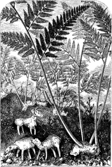 Vegetable lamb (from Svenska Familj-Journalen, 1879).png