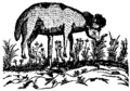 Vegetable lamb of tartary.png
