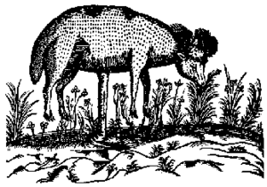 Vegetable Lamb of Tartary - The Vegetable Lamb in a 17th-century illustration