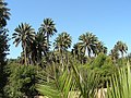 Vegetación nativa.jpg