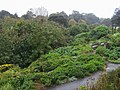 Ventnor botanic gardens - geograph.org.uk - 1034141.jpg
