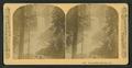 Vernal Falls, 630 feet. Cal, by Littleton View Co..png