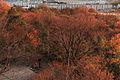 View from Futamurayama Observation Deck (Winter)1, Toyoake 2009.JPG