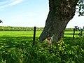 View towards North Wood - geograph.org.uk - 455810.jpg