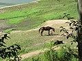 Views around Munnar, Kerala (73).jpg