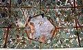 Villa giulia, portici con affreschi di pietro venale e altri, pergolato 24.jpg