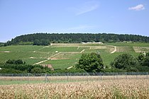 Vineyards in Chablis.jpg