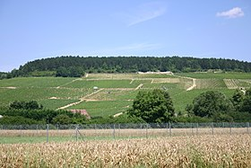 Image illustrative de l'article Chablis (AOC)