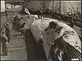 Visserij Walvisvangst, Bestanddeelnr 036-0144.jpg