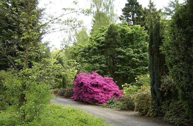 Arquivo: Von Gimborn Arboretum 1.jpg