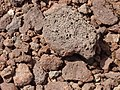 Vulcanic stone - Azores (385588749).jpg