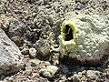 Vulkan-Krater, Nisyros.jpg