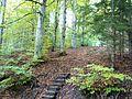Wanderweg - panoramio (12).jpg