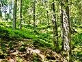 Wanderweg bei der Breitachklamm - panoramio.jpg