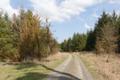 Wartenberg Landenhausen Barkbeetle Damaged Piceoideae N.png