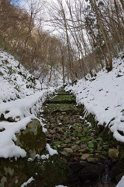 ファイル:Wasabi Field in Hikimi, Shimane, Japan in Winter.JPG