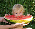 Wassermelone, Böhringer.JPG