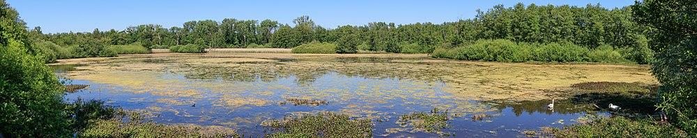 Lake in the Weingarten bog