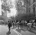Wereld Dierendag 1964 , ruiters in tegenlicht, Bestanddeelnr 916-9725.jpg
